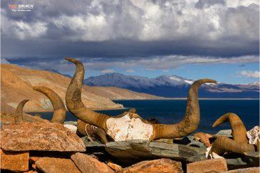 Священное озеро Манасаровар. Тибет