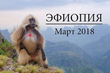 Поездка в Эфиопию. Март 2018