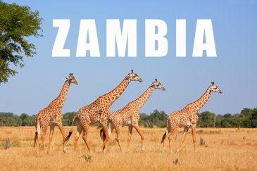 Фотографии Замбии